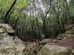 320px-Wadi_sharach1