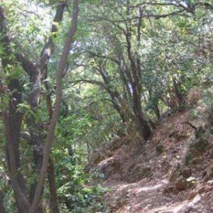 320px-yagur_nesher_trail